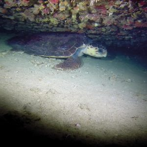 Night Dive Huatulco